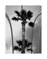 Valencia XVIII (BLANCA GOMEZ) Tags: spain valencia bw blackwhite urban light shadows shapes textures silhouettes sky clouds jardin garden sculpturalgarden umbraculo lumbracle palmtrees palmeras santiagocalatrava ciudaddelasartesylasciencias cityofartsandsciences arches parabolic