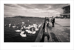 Lunch time (Parallax Corporation) Tags: southportpromenade southportmarina feeding swans ramadahotel blackwhite wideangle people sonya7rii sonygmaster24mmf14