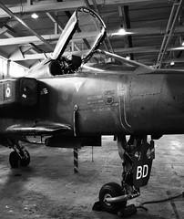 Sepecat Jaguar GR1 XX976 (Fleet flyer) Tags: sepecatjaguargr1xx976 sepecat jaguar gr1 xx976 sepecatjaguargr1 sepecatjaguar jaguargr1 raf rafcosford royal air force