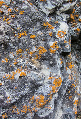 Lichen (BHuij) Tags: camera canon compact landscape nature ps parkway point power powershot provo river s100 shoot shot spring trail water