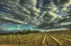 New Hall Vineyards (nigdawphotography) Tags: vinyard grapes wine newhall essex church