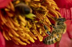 Jardin botanic (katia Nicolet) Tags: macroinsectes