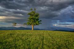 Mezi sluncem a bouří (Radebe27) Tags: strom tree weather jaro spring mraky clouds sky nebe valassko wallachian zlinskykraj czechrepublic ceskarepublika beskydy sony nex6 krajina landscape