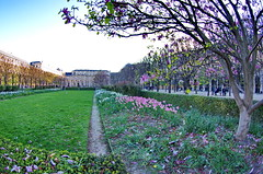 517 Paris en Mars 2019 - dans le Jardin du Palais Royal (paspog) Tags: paris france palaisroyal mars march märz 2019 magniolia jardin jardindupalaisroayl