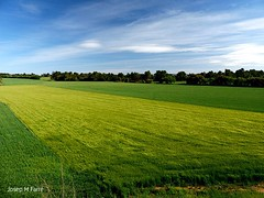 Green & Yellow fields (Josep M Farré) Tags: segarra cereal catalunya catalonia cataluña katalonien