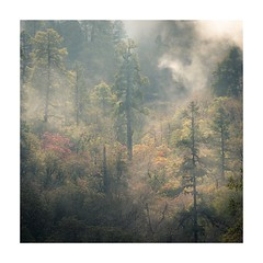 Jaljala Dil 1 (SiKenyonImages) Tags: nepal clouds fog annapurna trees misty