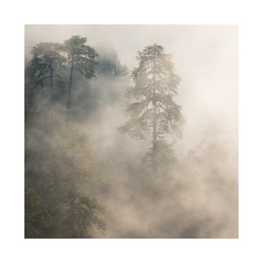 Jaljala Dil 2 (SiKenyonImages) Tags: nepal clouds fog annapurna trees misty