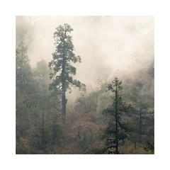 Jaljala Dil 3 (SiKenyonImages) Tags: nepal clouds fog annapurna trees misty