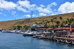 699 (bigeagl29) Tags: maalaea maui hawaii island oceanfront beach scenic scenery