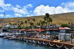 698 (bigeagl29) Tags: maalaea maui hawaii island oceanfront beach scenic scenery