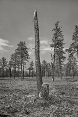 Montgaue Plains (frntprchprss) Tags: tree forest landscape sky clouds nature hike jamesgehrt blackandwhite