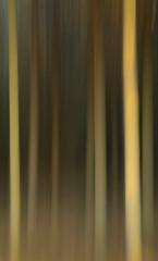 Forest (140/365) (johnstewartnz) Tags: forest bottlelakeforest icm intentionalcameramovement canon canonapsc apsc eos 100canon 7dmarkii 7d2 7d canon7dmarkii canoneos7dmkii canoneos7dmarkii 2470 2470mm ef2470mmf4l canonef2470f40l trees 140365 day140 onephotoaday onephotoaday21019 oneaday 365project project365