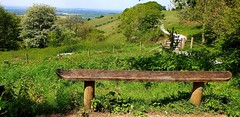Aston Rowant Chiltern Hills Ridgeway, Oxfordshire. UK (standhisround) Tags: bench seat fence gate benchmonday behindfences theridgeway path oxfordshire astonrowant walkway longwalk countryside scenic horizon view green trees grass bushes hbm chilternhills uk england