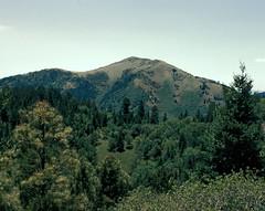SierraBlancainsummer (michaelmaguire4) Tags: forest mountain