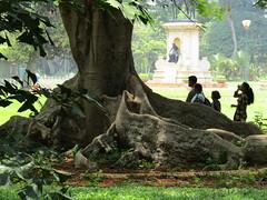 IMG_8918 (belight7) Tags: tree lalbagh gardens bangalore india karnataka city south