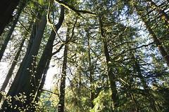 treehousepoint_09 (natashatakasato) Tags: washington pnw treehousepoint forest sony morning moss