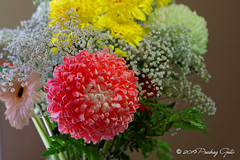 Still Life (Pedja Photo (Pedja G)) Tags: flowers vaze stilllife predragg pedjag pedjaphotography sonyalpha a77ii sal1650mm28