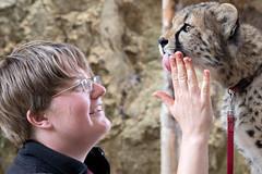 Trainer with Cheetah Cub. (LisaDiazPhotos) Tags: cheetah behind scenes kristyn cub lisadiazphotos sandiegozoo sandiegozooglobal sandiegozoosafaripark sdzsafaripark sdzoo sdzsp