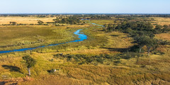Water heading south (Jennie Stock) Tags: helicoptertrip maun aerial okavango landscape