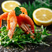 Salad with shrimps and arugula. Diet food