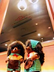 💚 520 ♥ 我愛你 ♥ I Love You 💚 (violet-pegasus) Tags: シルバニアファミリー シルバニア sylvanianfamilies calicocritters 森林家族 mywoodlandcritters森林の小精靈 sylvanian miniature critters animal doll toys character figure hedgehog 520 iloveyou iphonephotography sylvanianphotography calicophotography dollphotography toyphotography sylvanianstagram calicostagram dollstagram toystagram instasylvanian instacalico instadoll instatoys