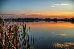 Springs Lake. (Ian Ramsay Photographics) Tags: springfarm newsouthwales australia springslake stunning sunset water reeds reflections west scene