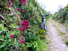 IMG_5317 (Photopedaler) Tags: cornishcycling trails tracks bridleways wildflowers