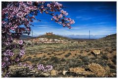 entre flores de almendro (bit ramone) Tags: granada andalucía españa spain altiplano almendro almond castle castillo bitramone árbol tree