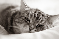 Millie, May 2019. (Jonathan Fletcher Photography) Tags: millie cats pussy kitty tabby cute sweet nikond850 d850 nikon 70300