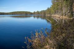 Outokumpu - Finland (Sami Niemeläinen (instagram: santtujns)) Tags: outokumpu suomi finland luonto nature särkisalmi outdoors pohjoiskarjala north carelia metsä forest