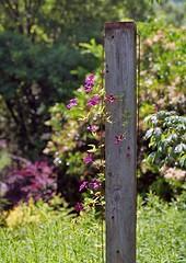 DSBC - 05 (SnappinDragon) Tags: film mediumformat 645 flower plant botanical