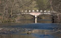 Ponte delle catene XIX century, Lambro river (by emmeci) Tags: pontedellecatene xixsecolo aprile neoclassico luigicanonica parcodimonza monza 1820