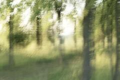 Quando i boschi cantano (margot 52) Tags: mosso bosco alberi mauriziocorona