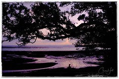 After sundown, Manukau Harbour (cjhall.nz) Tags: x100f nature landscape silhouette tree purple pink lowtide sand beach newzealand auckland dusk sundown sunset greenbay manukauharbour