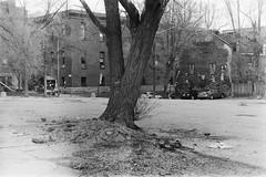 Prendre racine VI (Sarah-Kim Bisson) Tags: arbre tree montréal montreal bw film