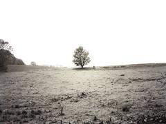 A lone tree alone (Speeesh) Tags: monochrome tree tåstrup harlev danmark denmark