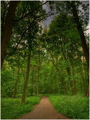 keep on track (Andy Stones) Tags: park woods woodland trees foilage trunks branches leaves wild garlic bushes track pathway path sky cloud nature naturephotography naturelovers natureseekers scunthorpe northlincs northlincolnshire nlincs photography photoof image imageof imagecapture outdoors outside walking walk greenery gree