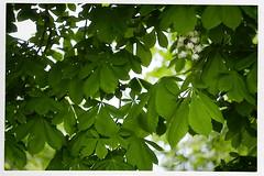 Shirley 1926-2019 R.I.P. 12 (John Teulon Ladd) Tags: schwarzwald shirley helios44m458mmf2 fujixt10 blackforest