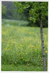 Shirley 1926-2019 R.I.P. 10 (John Teulon Ladd) Tags: schwarzwald shirley helios44m458mmf2 fujixt10 blackforest