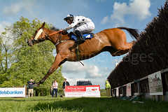 Race 7 BONUS - Ellary (JTW Equine Images) Tags: p2p point pointtopoint knutsford cheshire tabley nh racing horse equine jockey trainer jumps
