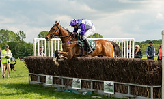 Race 5 BONUS - Global Power-2 (JTW Equine Images) Tags: p2p point pointtopoint knutsford cheshire tabley nh racing horse equine jockey trainer jumps