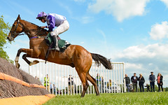 Race 5 BONUS - Global Power (JTW Equine Images) Tags: p2p point pointtopoint knutsford cheshire tabley nh racing horse equine jockey trainer jumps