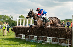 Race 5 BONUS - Bear's Affair (JTW Equine Images) Tags: p2p point pointtopoint knutsford cheshire tabley nh racing horse equine jockey trainer jumps