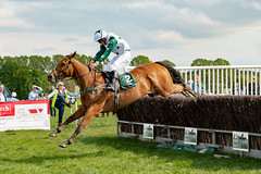 Race 5 - Duke Arcadio-13 (JTW Equine Images) Tags: p2p point pointtopoint knutsford cheshire tabley nh racing horse equine jockey trainer jumps