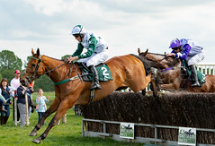 Race 5 - Duke Arcadio-8 (JTW Equine Images) Tags: p2p point pointtopoint knutsford cheshire tabley nh racing horse equine jockey trainer jumps