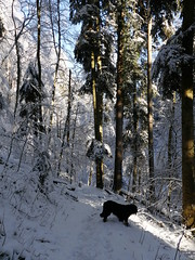 PIC14747-FZ300 (daniele.hauenstein) Tags: hund hovawart