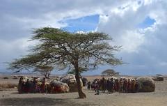 Kenya- Turkana village (venturidonatella) Tags: kenya africa turkana turkanavillage turkanalake nikon nikond500 d500 people persone gentes gente villaggio village panorama landscape albero tree capanne huts hut gruppu group minorities minoranza sole sun ombra shadow etnic etnia loyangalani
