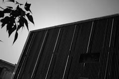 Dark City : Iron (Storyteller.....) Tags: city dark blackandwhite blackwhite iron building stracture tree