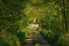 green tunnel (JoannaRB2009) Tags: road path countryside spring green trees tunnel nature łódzkie lodzkie polska poland landscape view forest woods