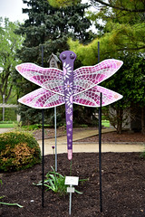JIM_2631 (James J. Novotny) Tags: dragonflies sculptures sculpture d750 nikon rotarygarden rotarybotanicalgardens gardens garden gardenbotanical unlimitedphotos unlimiedphotos unlimited art artwork
